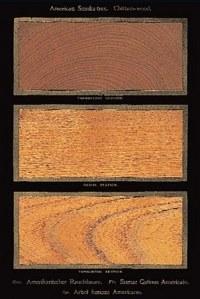 woodexample